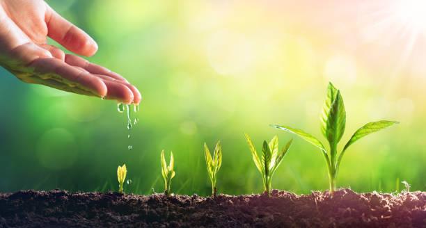 تفسير حلم النبات في المنام لابن سيرين