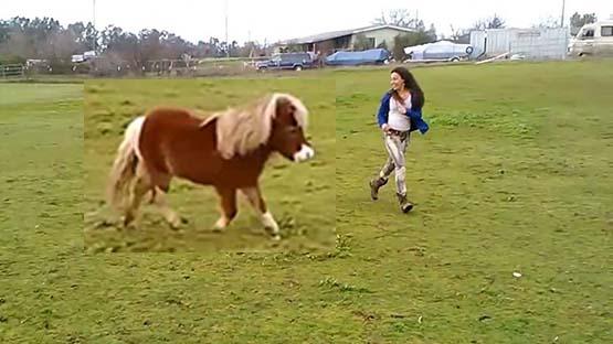 تفسير حلم حصان يلاحقني في المنام لابن سيرين