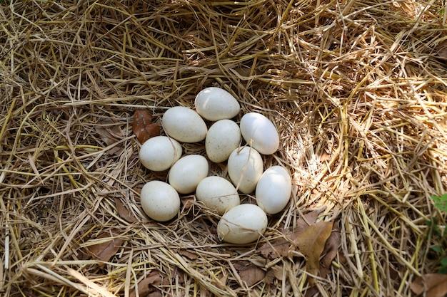 تفسير بيض الثعبان في المنام بيض الافعى في الحلم