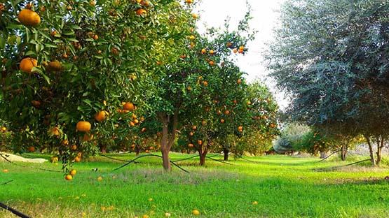 تفسير حلم المزرعة في المنام لابن سيرين