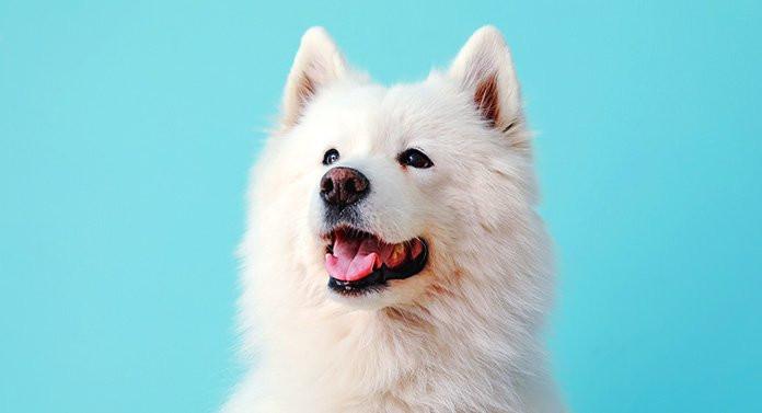 تفسير الكلب الابيض في الحلم رؤيا كلب ابيض في المنام