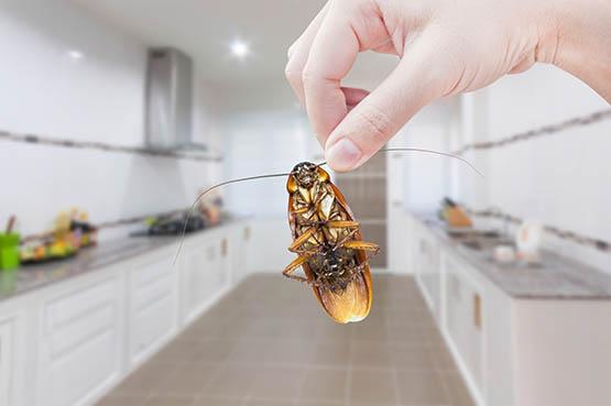 تفسير حلم الحشرات في البيت في المنام لابن سيرين