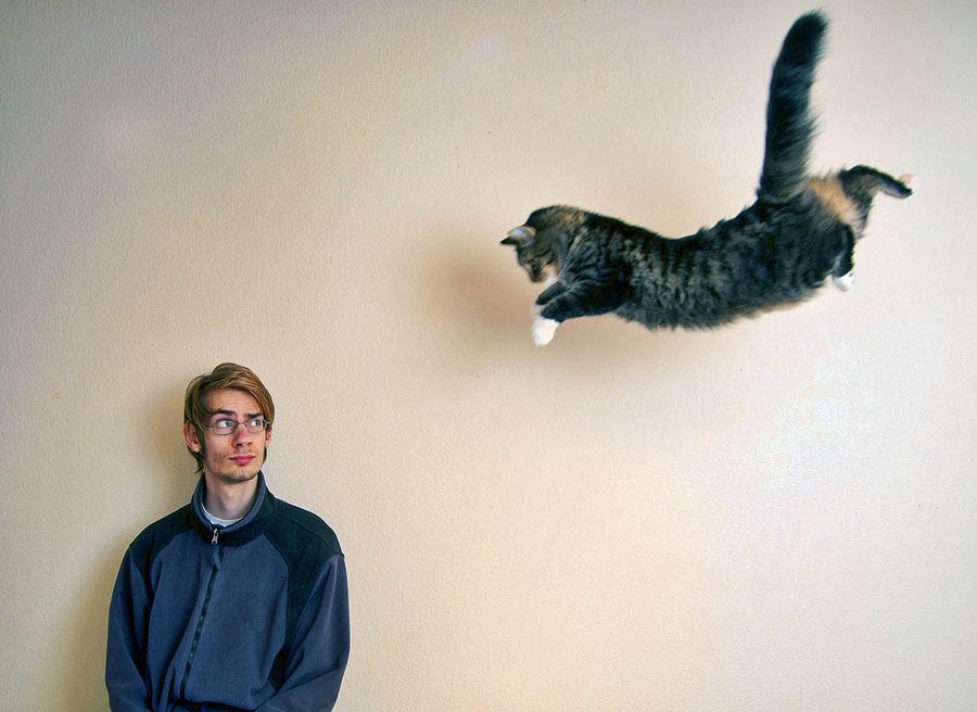 تفسير القطه تهاجمني في الحلم هجوم القطط في المنام